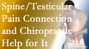 Manchester Chiropractic & Sports Injuries shares recent research on the connection of testicular pain to the spine and how chiropractic care helps its relief.